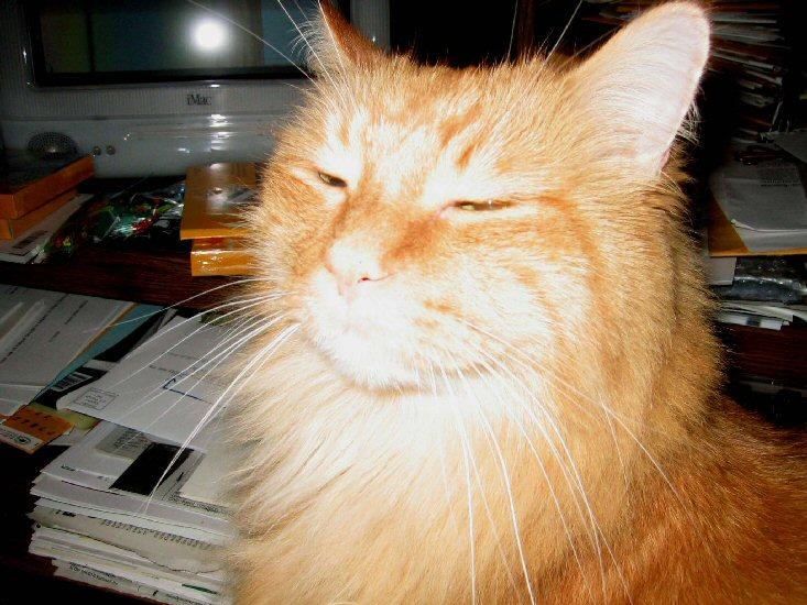 cat's BUK